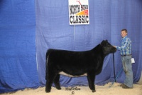 2012 Open Show Grand Champion Heifers